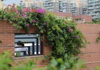 我院开展庭院绿化建设工作